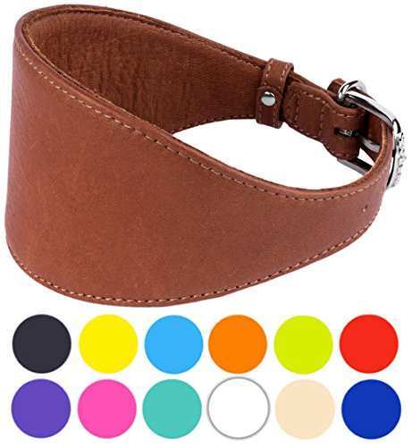 CollarDirect Whippet Dog Collar, Leather Greyhound Collars, Leather Dog Collar Lurcher Saluki Soft Padded Small Medium Large Black Blue Red Brown Pink Navy Green (Neck Fit 11