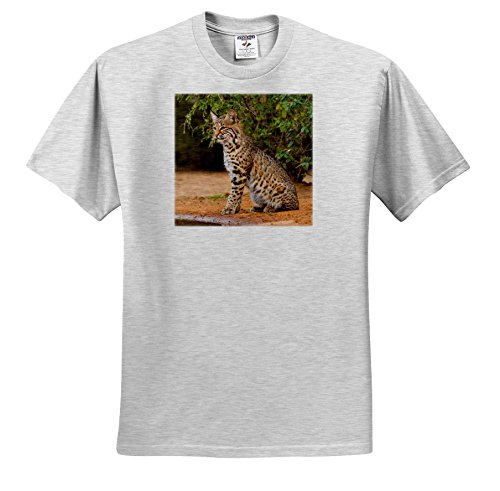 Danita Delimont - Big Cats - Bobcat, Lynx Rufus, On Alert For any Danger by a Pond. - T-Shirts - Toddler Birch-Gray-T-Shirt (3T) (TS_279454_32)