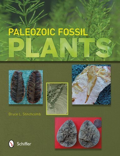Paleozoic Fossil Plants by Bruce L. Stinchcomb (2013) Paperback (Fossil Legends)