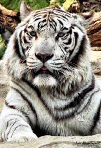 White Tiger Location