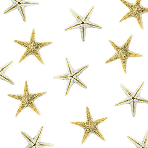 Tiny Miniature Fairy Garden Beach Critter Starfish Marine Life Collection for Arts & Crafts Projects, Decorations, Party Favors, Invitations (90 Pieces)