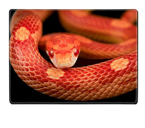 corn snake for sale - 3