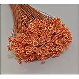 Glixia Marcela Mazzo Da 50 Grammi (Arancio)