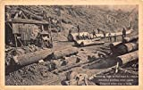 Postcard Skidding Logs to Railroad by Steam-actuated Steel Cable~113782