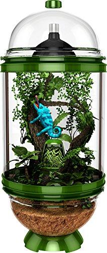 BioBubble Chameleon Cantina, Green by Bio-Bubble