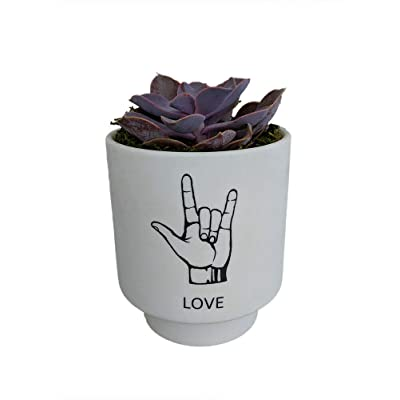 AchmadAnam - I Love You Sign Language Planter with Live Succulent Plant - ASL - Live Trends : Garden & Outdoor