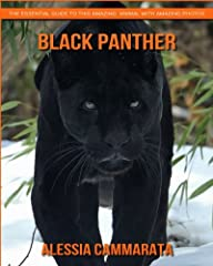 Black Panther: The Essential Guide to This Amazing Animal with Amazing Photos Black panthers are the dark-colored version of large cats such as leopards and jaguars. They are popular for their climbing skills, and they are known to be one of ...
