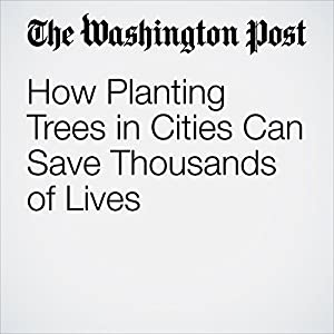 How Planting Trees in Cities Can Save Thousands of Lives