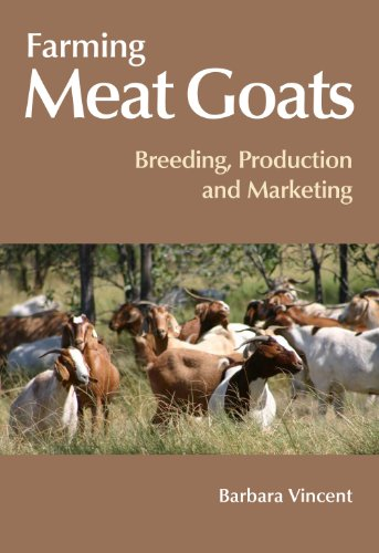 meat goat farming - 9