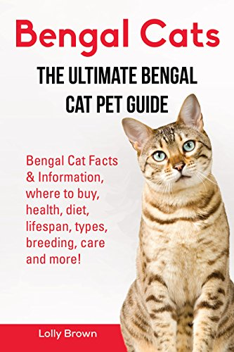 bengal cats bengal cat facts information where to buy health