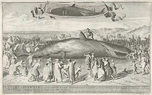 """Classic Art Poster - Sperm whale stranded at Egmond aan Zee, 1764, Cornelis van Noorde, 1764 11"""" x 17"""""""