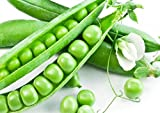 Bean Seeds 50g Sugar Snap Peas Pole Pisum Sativum Fava Garden Vegetable Seeds Organic Green Fresh Chinese Small for Planting Outside Door for Cooking Dish Soup Taste Sweet Delicious(Pole Pea Seeds)