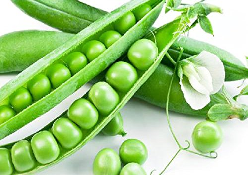 - Bean Seeds 50g Sugar Snap Peas Pole Pisum Sativum Fava Garden Vegetable Seeds Organic Green Fresh Chinese Small for Planting Outside Door for Cooking Dish Soup Taste Sweet Delicious(Pole Pea Seeds)