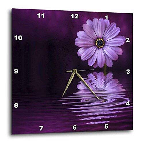 Andrea Haase Nature Photography - Purple gerbera daisy reflecting