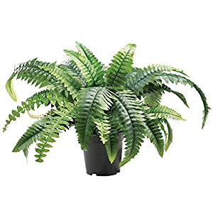 "Faux Fern Artificial Potted Plant with Plastic Base, Tabletop 13""H 16"