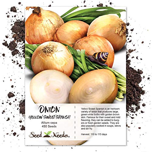 Seed Needs, Utah Yellow Sweet Spanish Onion (Allium cepa) 450 Seeds Non-GMO