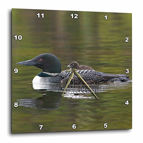 3dRose British Columbia. Common Loon bird-CN02 CSL0065-Charles Sleicher-Wall Clock, 10-inch (DPP_70326_1)