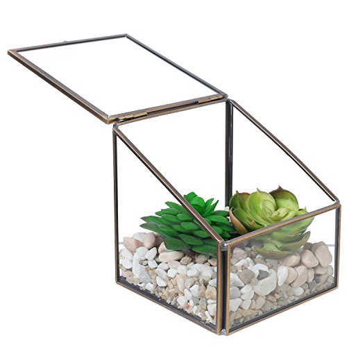 yle Brass Frame Clear Glass Display Shadow Box with Angled Lid ()