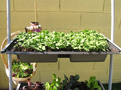 Estantería para macetas, stand para plantas 65x31x136 cm: Amazon ...