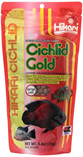 Hikari 8.8-Ounce Cichlid Gold Floating Pellets for Pets, Large (Best Filter For Flowerhorn)