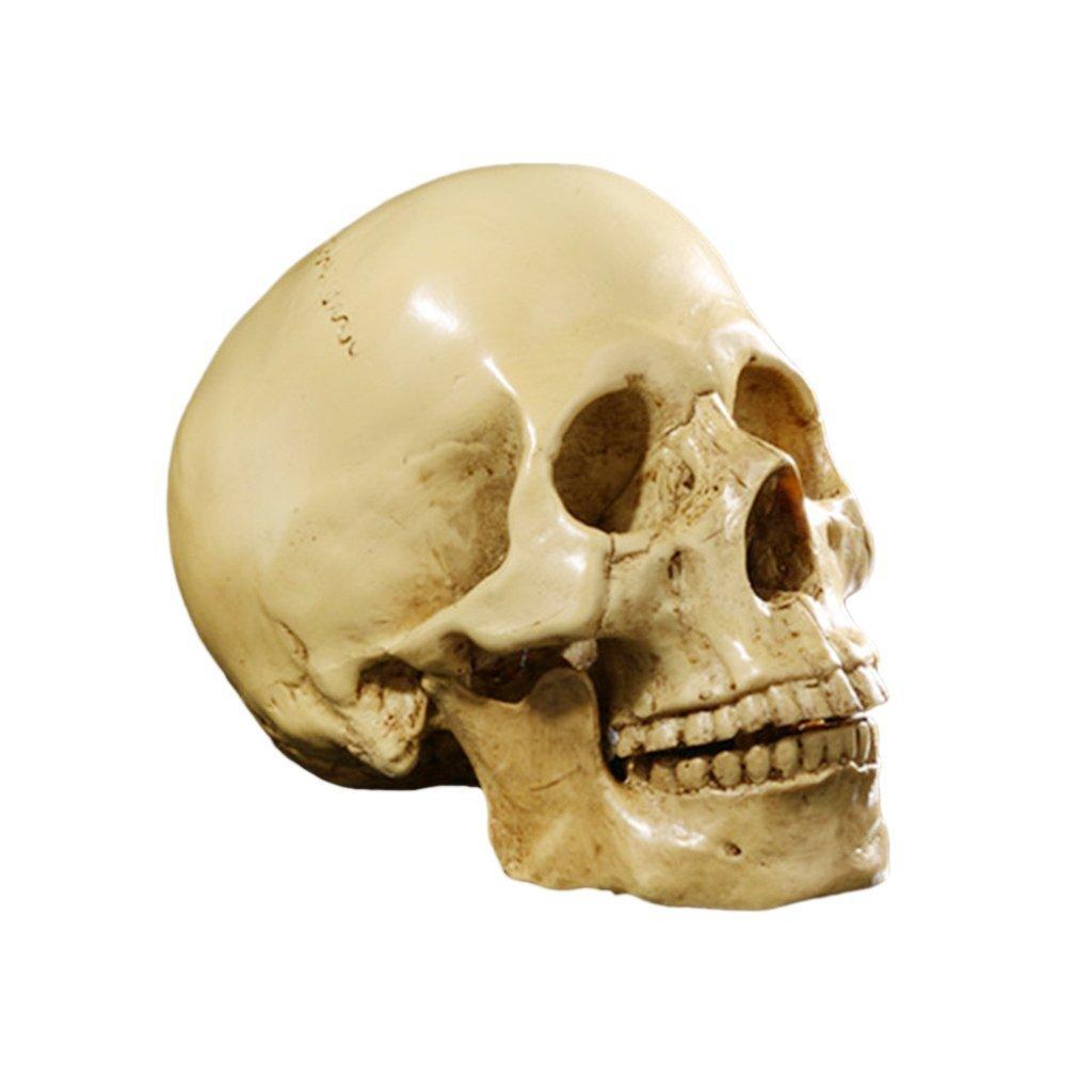 Yundxi Modè le 1: 1 Crâ ne Humain en Ré sine Enseignement Anatomique, Crâ ne de dé coration, pour dé corer Votre Maison Crâne de décoration pour décorer Votre Maison