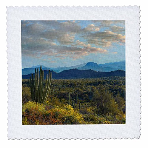 3dRose Danita Delimont - Deserts - Organ Pipe Cactus National Monument and Ajo Mountains, Arizona - 20x20 inch quilt square (qs 258765 8)