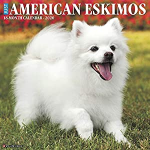 Just American Eskimos 2020 Wall Calendar (Dog Breed Calendar) 4