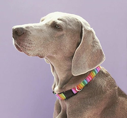 Hand Made Dog Collar by Oh My Pawd Pepperoni Pizza Collar for Pets Size Small 3//4 Inch Wide and 12-17 Inches Long
