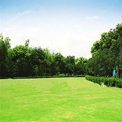 QiBest Rare Grass Seeds Garden Soccer Fields Grass Plants Seeds Outdoor Lawn Seeds Grasses : Garden & Outdoor