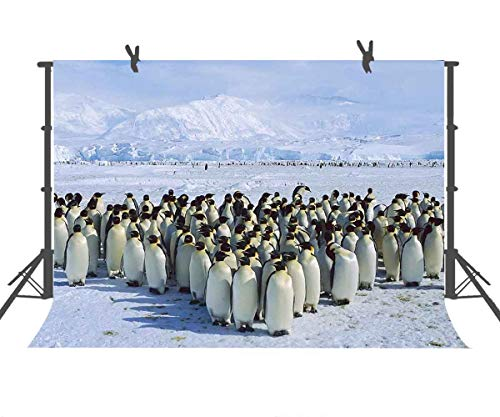 FUERMOR Winter Background 7x5ft Penguin Group Photography Backdrop Photo Video Props XCFU277