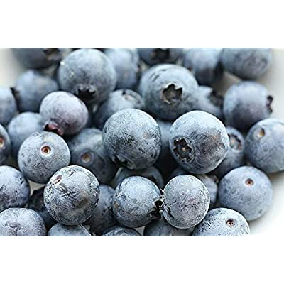 Southern Blueberry 1000 Seeds - Blueberries Organic Seeds for Planting, Blueberries Fresh Fruit Seeds, Non GMO Berry Seeds, Dwarf Blueberry Bush Seeds for Planting Indoors : Garden & Outdoor