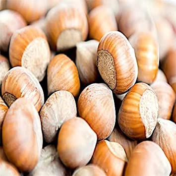 Amazon com : Hazelnuts - Bulk Hazelnuts With Skin 10 Pound