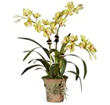 Diane James Green Chinese Cymbidium Orchid