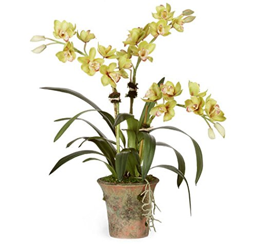 Diane James Green Chinese Cymbidium Orchid by Diane James Home