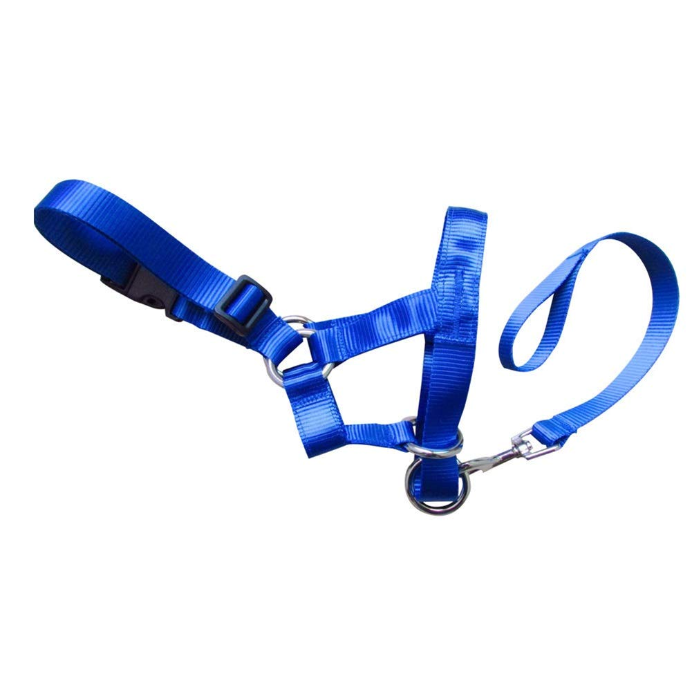 Dsfdgfhfdgdfhg Collar Principal Perro de Nylon for Mascotas Gentle ...