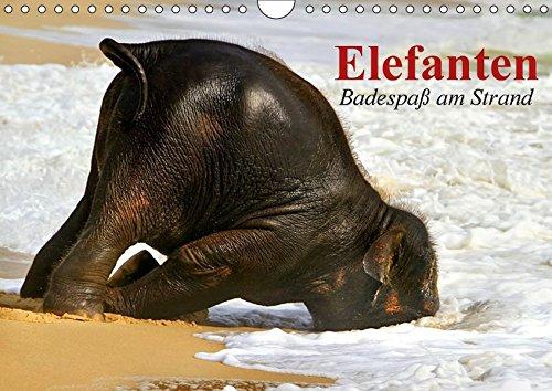 elefanten-badespass-am-strand-wandkalender-2017-din-a4-quer-elefanten-babys-beim-baden-in-thailand-monatskalender-14-seiten-calvendo-tiere