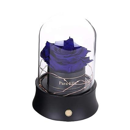 PROOY Rose llevó la lámpara de la Botella-Real Encantado Rosa en ...