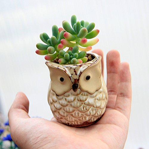 6 pcs mini small ceramic owl succulent plant pot flower for Small clay flower pots