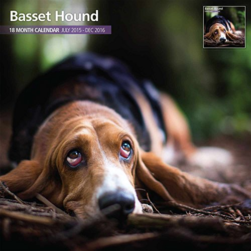 Basset Hound 18 Month 2016 Traditional Wall Calendar