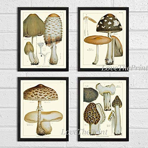 (Mushroom Print Set of 4 Antique Botanical Beautiful Edible and Poisonous Brown Beige Natural Mushrooms French Truffle Forest Nature Home Room Decor Wall Art Unframed)