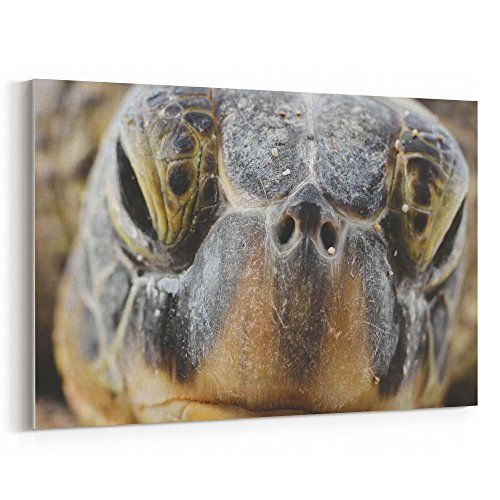 Westlake Art - Macro Turtle - 5x7 Canvas Print Wall Art - Canvas Stretched Gallery Wrap Modern Picture Photography Artwork - Ready to Hang 5x7 ()