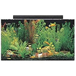 "SeaClear 50 gal Acrylic Aquarium Combo Set, 36 by 15 by 20"", Clear"