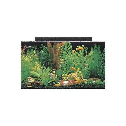 SeaClear 50 gal Acrylic Aquarium Combo Set, 36 by 15 by 20'', Clear by SeaClear
