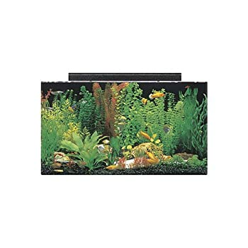 SeaClear 50 gal Acrylic Aquarium Combo Set 36 by 15 by 20 Clear