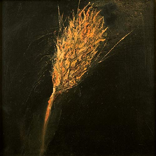 Dried Wheat (Limited Edition on Canvas - 15x15 in) -