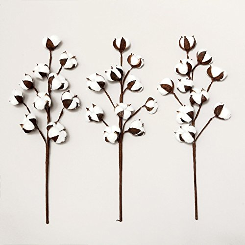 - VGIA 3 Pack 21 Inch Cotton Stems Farmhouse Style Display Filler - Floral Decoration