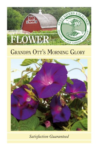 Seed Savers Exchange 0050 Open-Pollinated Flower Seeds, Grandpa Ott's Morning Glory, 100 Seed (Morning Glory Seed Packets)