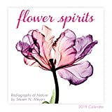 Flower Spirits 2019 Mini Calendar, Radiographs of Nature by Steven N. Meyers, 7 x 7, (CS-0465)
