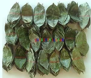 Amazon.com : Soursop Graviola Annona Muricata Guyabano 250 ... Dried Guyabano Leaves