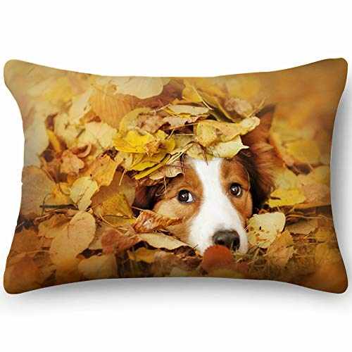 best bags Young Red Border Collie Dog Playing Animals Wildlife Parks Outdoor Pillowcases Decorative Pillow Covers Soft and Cozy, Standard Size 14
